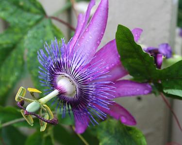 Williamsburg Flowers