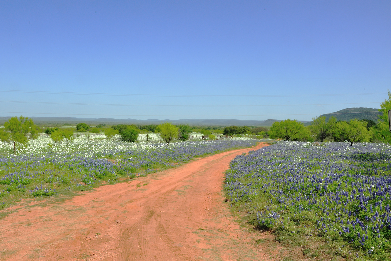 Wildflowers from Willow Loop, North of Fredricksburg TX