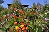 Flowers -Wilson Creek Winery, Temecula