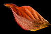 Single leaf in fall