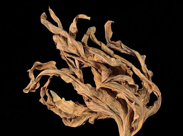 Unidentified leaf