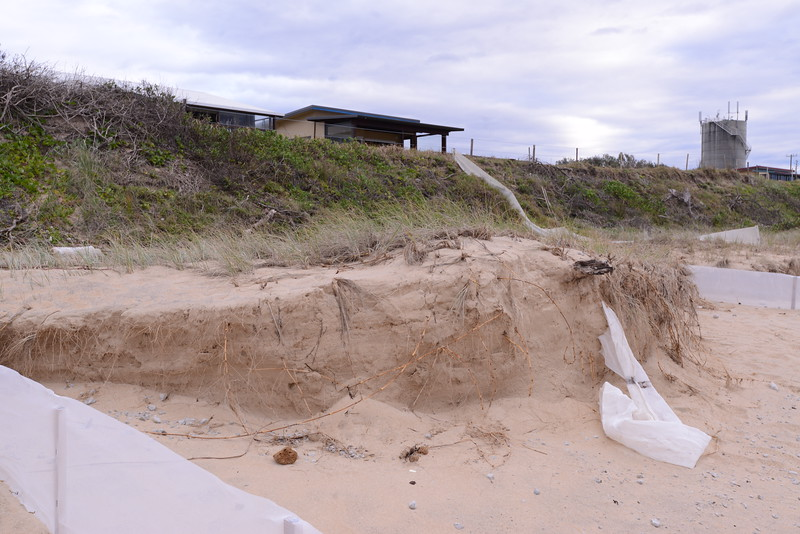 Dune outside Jay's house.  Note poor quality vegetation and point of ingress of water to right.