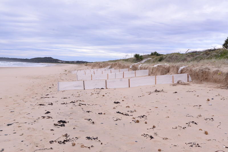 New sand fences, looking south.  We need dry conditions and high north east or south east winds to move sand along the beach.