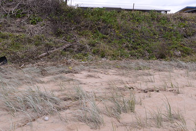 Site of ingress to toe of main dune.  Poor quality vegetation, poisoned Bitou not removed.  High risk situation.  Once the sea gets to the base of the main dune, it is destabilized.  In 2009 storms we lost about 12 feet from the top of the main dune.  Then-Mayor Ian Tiley and David Morrison of CVC  visited the dune at that time and made note of the damage.