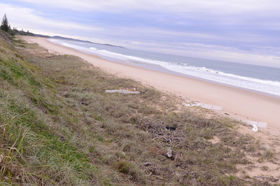 View north.  Old sand fences have been removed by wave action.  New sand fences being established.  Note cut away towards top of photo.  There is now a substantial amount of sand on the lower beach which should be scraped back up to re build the dune.  Note the uniformity of the cutaway and  the width of the beach.  The sand is still on the beach just further out.  We should capture this sand now and put it back on the dune.  That way we rebuild our sand bank for the next storm event.  Note healthy dune vegetation where I have been caring for the dune, even now with Wattle growing down the front of the dune.   The debris and old tire in the foreground are what is left from a gift of nature a few years back when there was massive flooding along the Clarence River.   Our beach was covered with debris which the CVC pushed up with machinery, however another opportunity was lost as the drivers had instructions no to push up any sand.