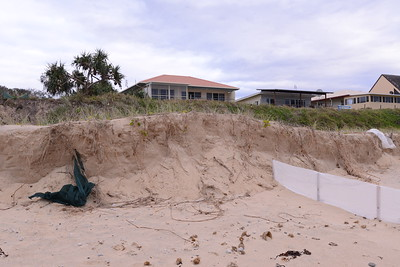 Old sand fence, green.  Note sand slippage at face of vertical cut away as dune reshapes itself to 30 degree profile.  This will further erode the face.  It may take years to rebuild the dune through catching sand by sand fences.