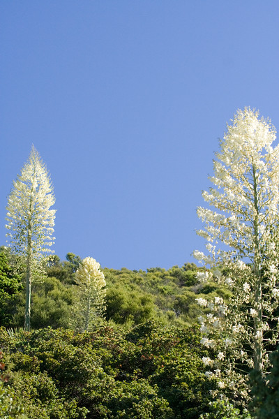 Flowers, Plants, Botanicals
