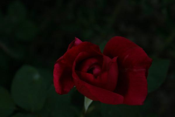 flowers 2009