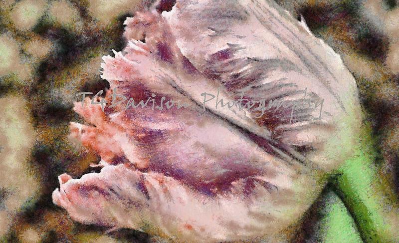 oil painting version of ruffled tulip