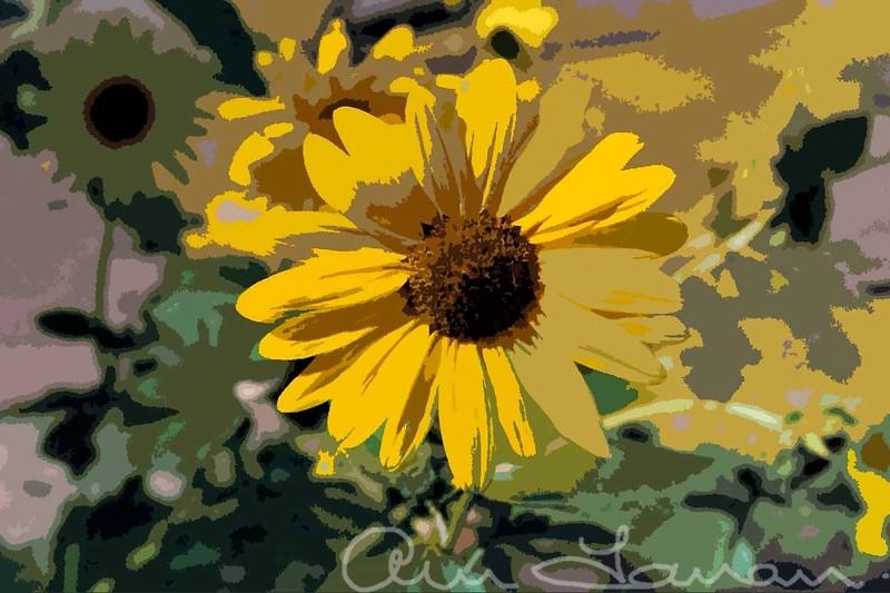 Sunflower Arizona