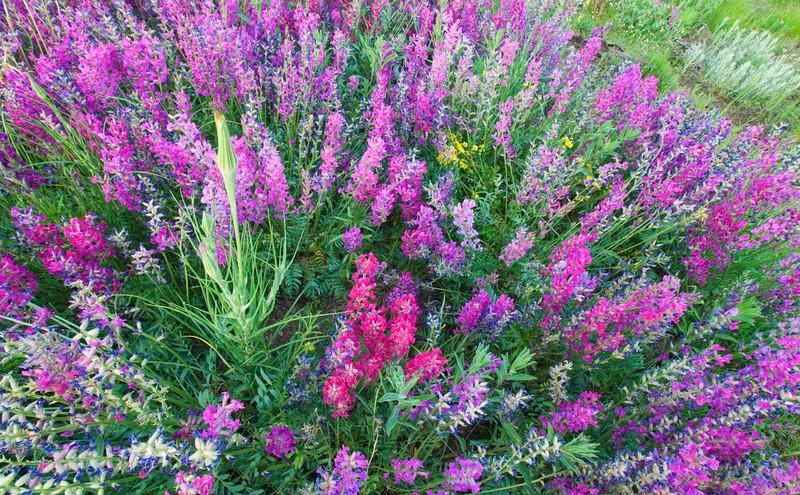 Kaleidoscope of wildflowers