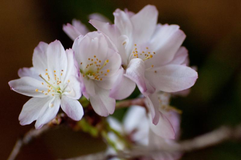 flowerPower-22