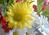 0720_yellow daisy