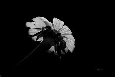 Basic black and white