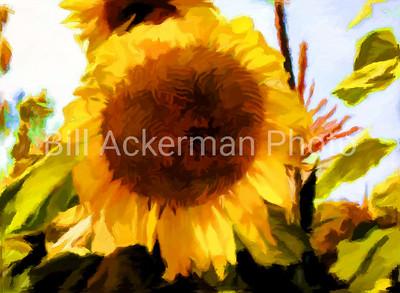 Sunflower In the Mode of Van Gogh