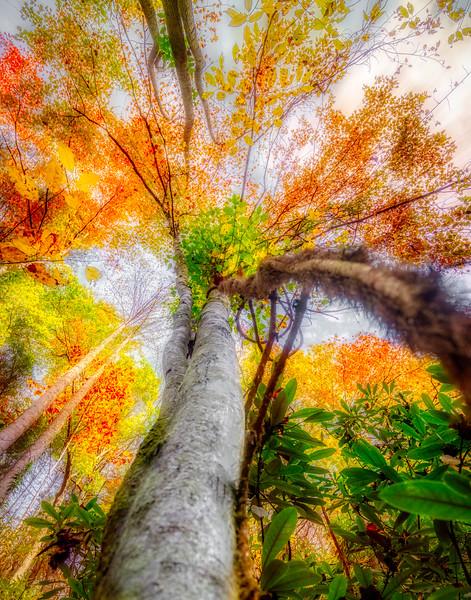 Autumn Tree (1)