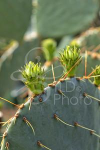 TLD_Cactus