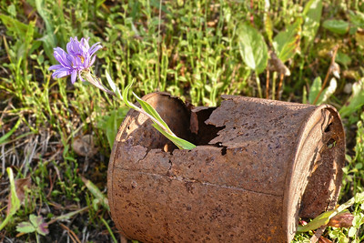 Rusty Can as a Flower Vase
