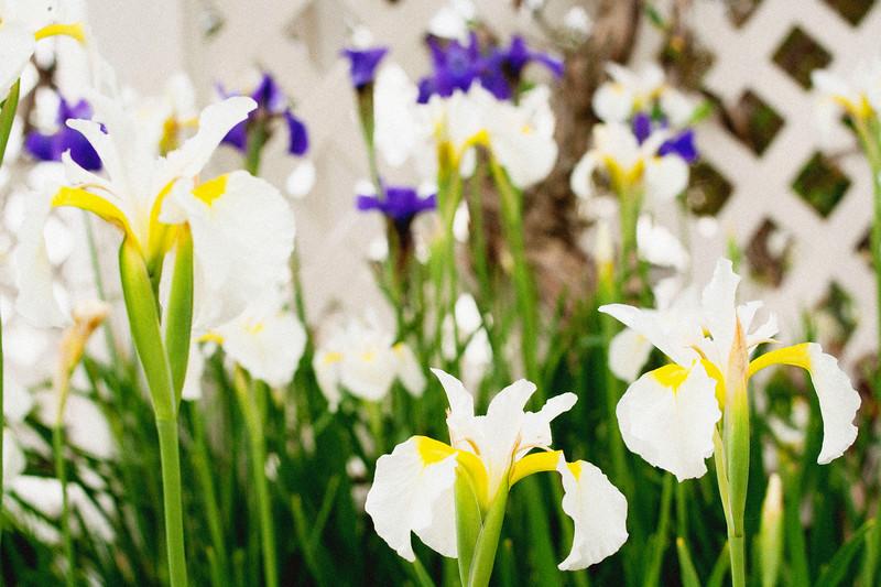 flower 06012016_1