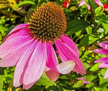pink flower 4-