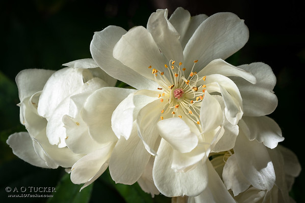 Allure Of Spring II