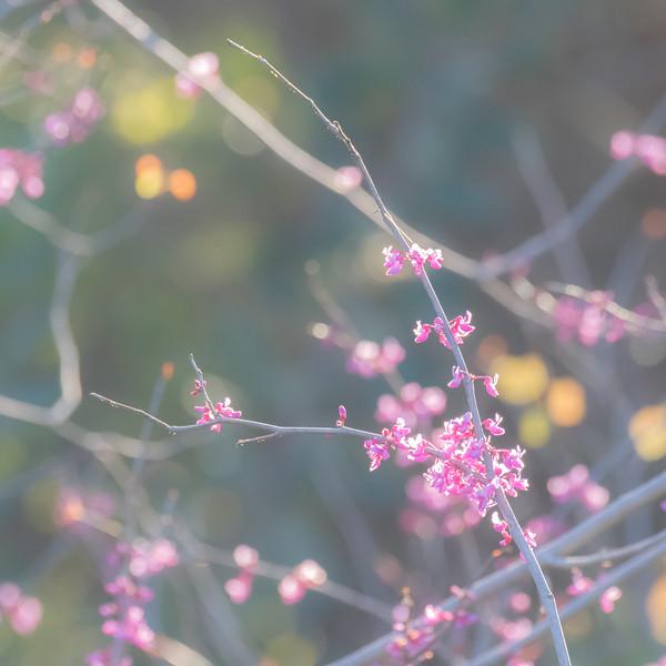 Hazy Pink Flowers