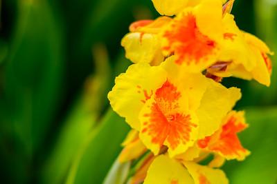 Yellow Flower Power