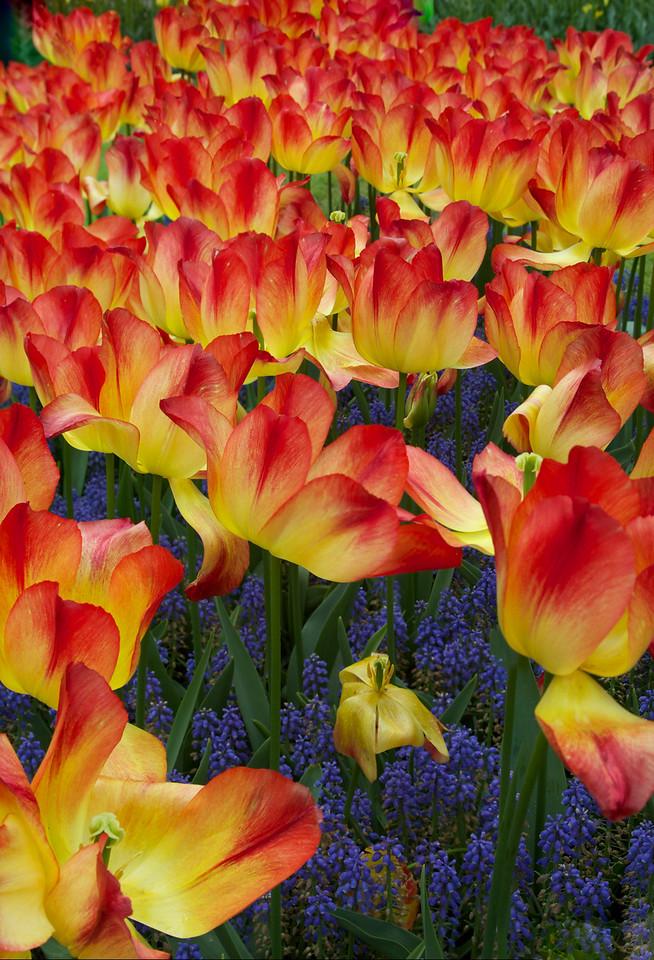 Tilt:shift flower vertical Pano1 - Version 3