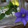 Clematis Flower 138
