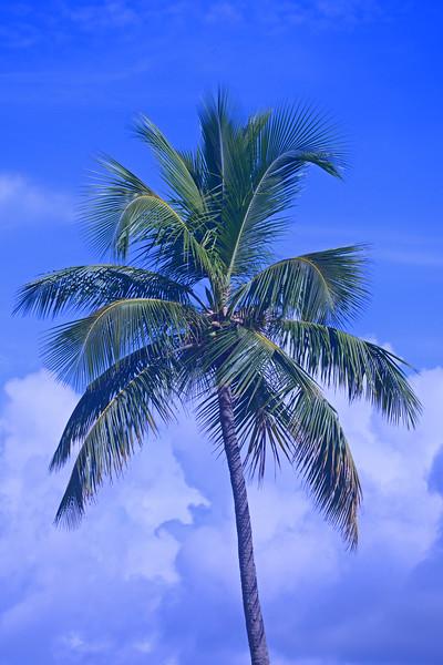 Palm Tree with pretty background.
