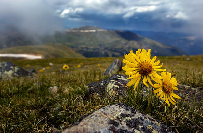 Backcountry Flowers