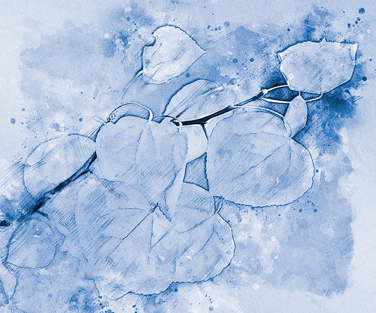aspen in blue ...