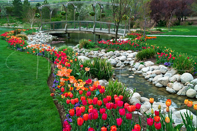 Tulip Bridge