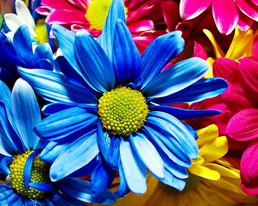 blue flower1
