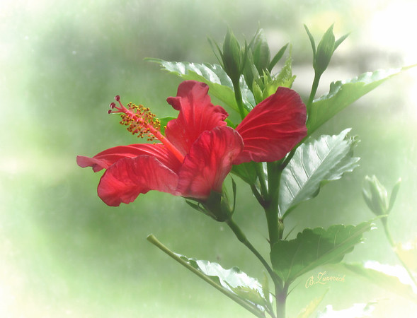 The Beauty Of Flowers