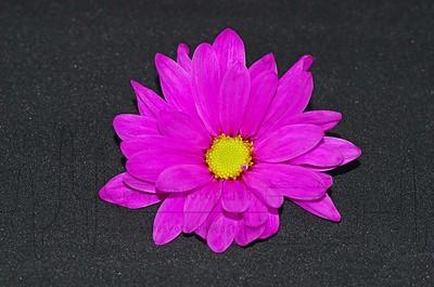 Full Pink Love