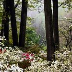 Jenkins Arboretum