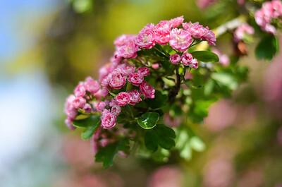 Flower #2