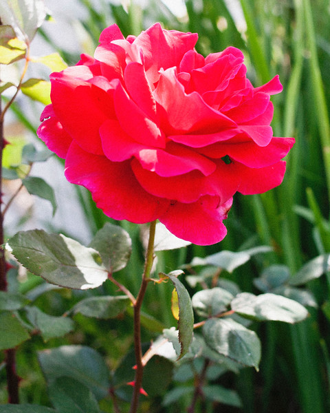flower06072016_4