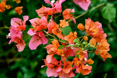 Caribbean Flower Paradise