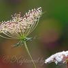 Tiny Seeds