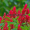 Orimential red ginger