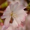 flowerPower-3