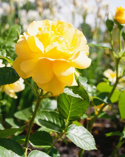 flower06072016_3