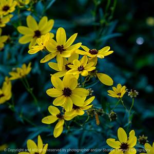 015-wildflowers-wdsm-05sep19-09x09-006-350-3270