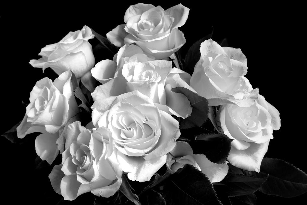 Roses, black and white