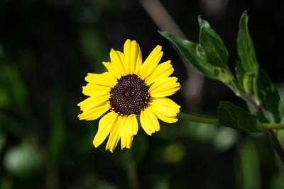 Flower Looking Left