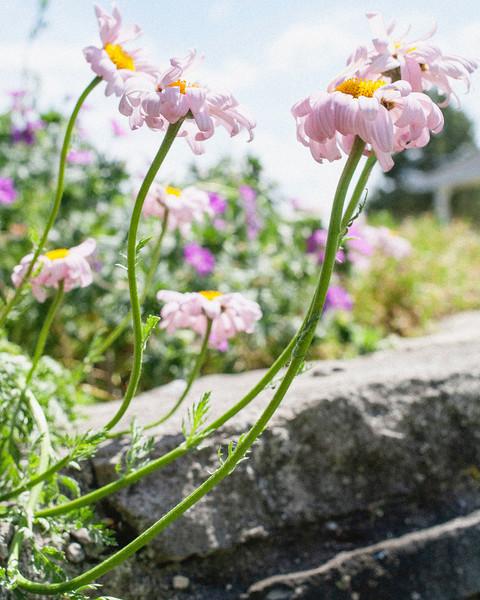 flower06072016_7