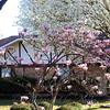 Magnolia And Pear