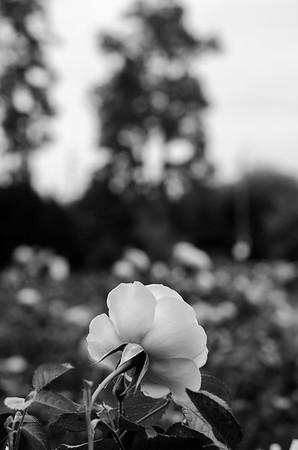 Edisto Memorial Gardens; Orangeburg, SC